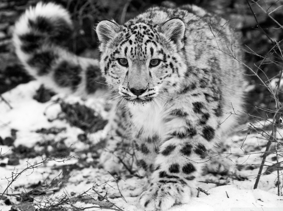Snow-Leopard-HD-desktop-wallpaper-Widescreen-Fullscreen